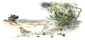 Illustratie vogels bij stuifzand
