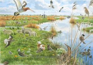 Weidevogels - Laag Holland lente