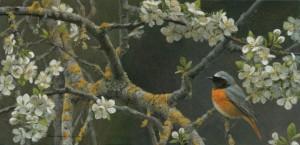 Schilderij Gekraagde roodstaart
