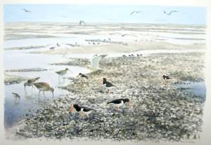 Illustratie vogels op mosselbank