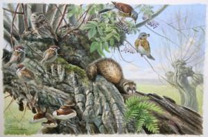Vogels en dieren in knotwilg