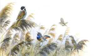 Vogels in het riet