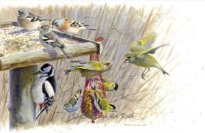 Illustratie vogels op voedertafel