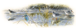 Illustratie vogels in slootje