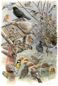 Illustratie Tuinvogeltelling