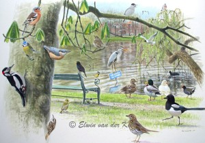Illustratie vogels in Wilhelminapark Utrecht