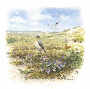 Illustratie vogels in duinen