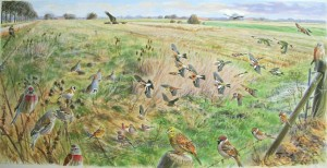 Illustraties vogels in akkerrand in winter