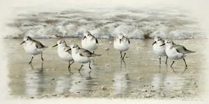 Schilderij drieteenstrandlopers