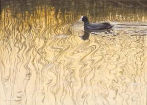 Schilderij meerkoet
