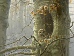 Schilderij bosuil