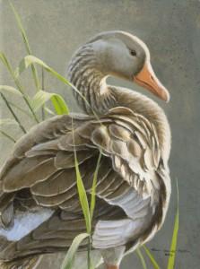 Schilderij Grauwe gans