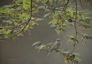 Schilderij Grauwe vliegenvanger
