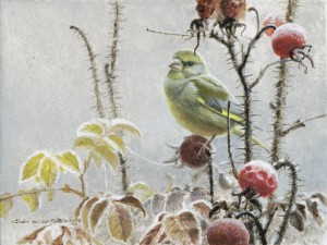 Schilderij Groenling