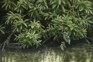 Schilderij IJsvogel