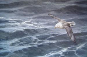 Schilderij Noordse stormvogel