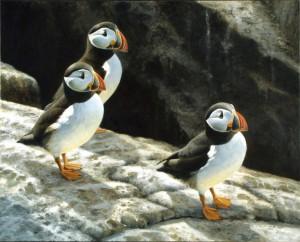 Schilderij Papegaaiduikers