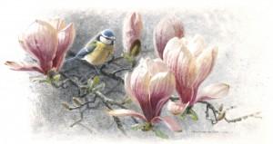 Schilderij Pimpelmees in magnolia