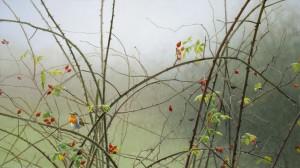 Schilderij Roodborst en rozenbottels