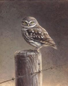 Schilderij Steenuil