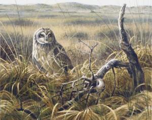 Schilderij Velduil