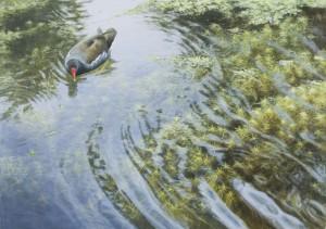 Schilderij waterhoen