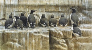 Schilderij Zeekoeten