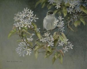 Schilderij Zwartkop in bloeiende krent