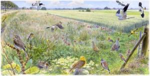Illustratie akkerrand in de zomer met vogels