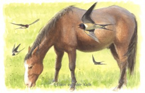 Illustratie paard en boerenzwaluwen