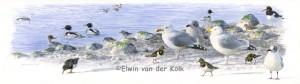 Illustratie vogels bij Brouwersdam