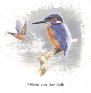 Illustratie ijsvogels