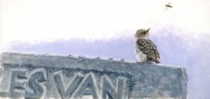 Illustratie jonge grauwe vliegenvanger