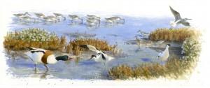 Illustratie kwelder en vogels