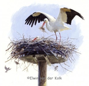Illustratie ooievaar op nest