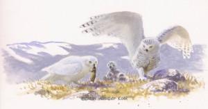 Illustratie sneeuwuilen op nest
