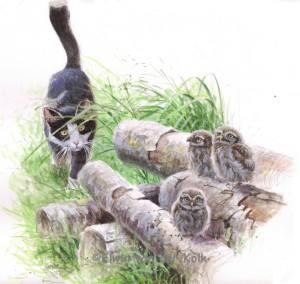 Illustratie jonge steenuilen