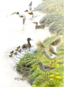 Illustratie vogels in weide voorjaar