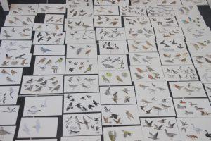 Illustraties vogelgids