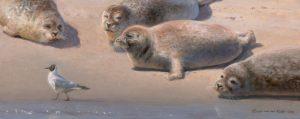 zeehonden-en-kokmeeuw_resized